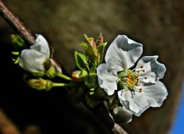 photo_app-46