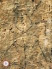 Desene rupestre Sohodol Gorj 02